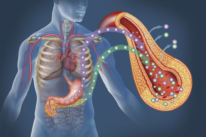 Did you know there are a number of connections between the pancreas ...